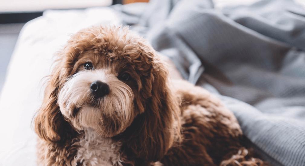 Spotify crea canal de música y podcasts para perros